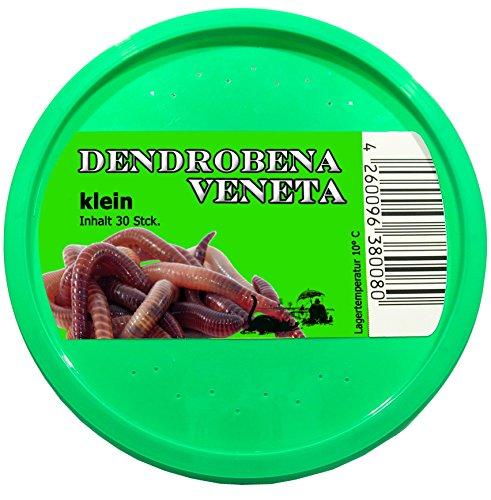 Feeders & more 30 Stück kleine Rotwurm Dendrobena Angelköder Kompostwürmer Angelwurm