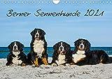 Berner Sennenhund 2021 (Wandkalender 2021 DIN A4 quer)