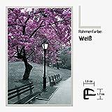 Kunstdruck Poster - Pink Tree Pinker Baum Laterne Bank