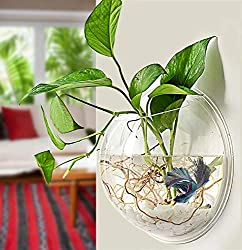 PRUGNA Wall-Hanging Fish Bowl - Best Aquaponics Kits