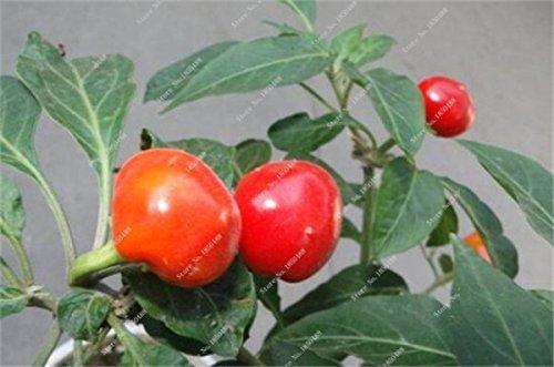 Cerise poivre Graines de légumes jardin Bonsai Chili usine Décoration non-Ogm Jardin Cuisine Assaisonnement Alimentation 200 Pcs 15