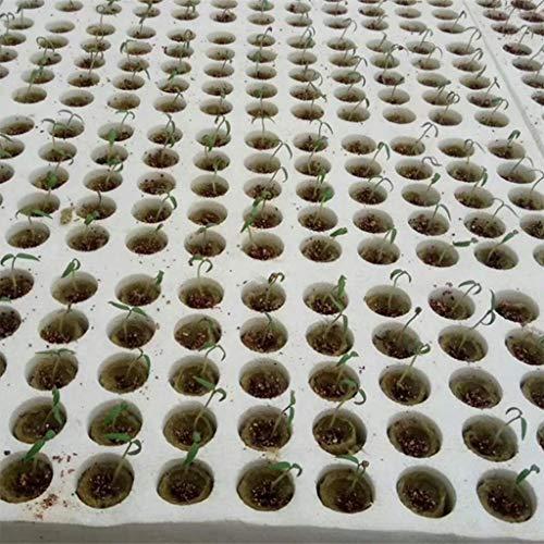 S-TROUBLE 20 Piezas Cilindro Planta de Lana de Roca Medios de Cultivo hidropónico Base de compresión de Cultivo sin Suelo para huerto de Invernadero de jardín