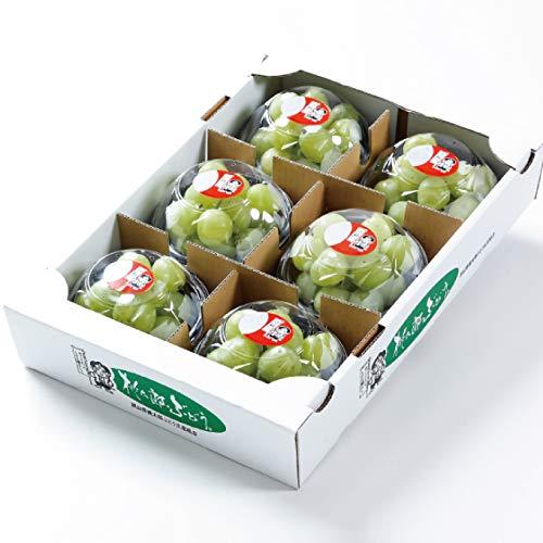 ぶどう 桃太郎ぶどう 詰み落とし 約200g×6パック 岡山県産 香川県産 葡萄 ブドウ