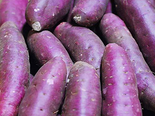 千葉県産 紫芋 パープルスイートロード Mサイズ 5kg(18〜20本)