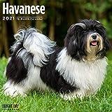 2021 Havanese Wall Calendar by...