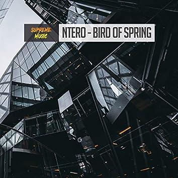 Bird of Spring