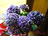 紫陽花 遅れてごめんね母の日 父の日 ギフト 誕生日プレゼント 新築祝い あじさい 鉢植え アジサイ 紫陽花 パープル5寸鉢植え