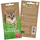 Premium Cat Grass Seeds for Planting: 1x 25g Plant Seeds for 10 pots natural Cat Treat – Fibre Supplement for Cats – Cat Grass Seed Fast Growing – Grass for Cats, Cat Plant – Cats Grass by PrettyKitty