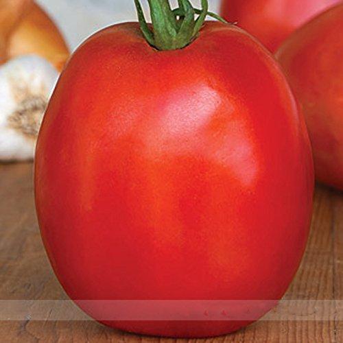 (Super Sauce * Ambizu *) super sauce tomate, graines hybrides Paquet professionnel, 100 graines