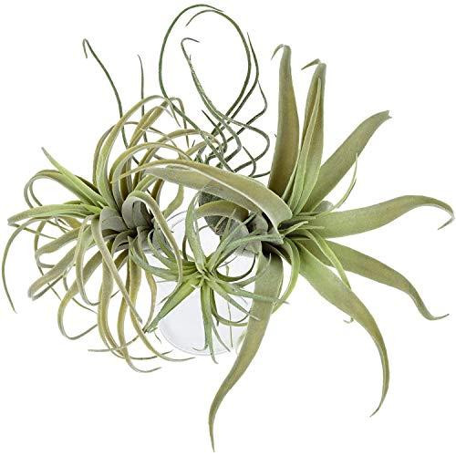 OVBBESS Künstliche Ananas-Gras, Luftpflanzen, künstliche Blumen, Tillandsien, Bromelien, Heim-/Gartendekoration, 4 Stück