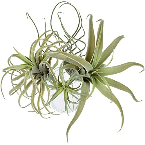 NEWBER 4Pack Artificial Pineapple Grass Air Plants Fake Flowers Faux Flocking Tillandsia Bromeliads Home Garden Decor