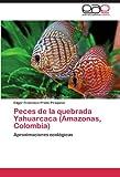 Peces de la quebrada Yahuarcaca (Amazonas, Colombia)...