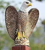 ZILIN Plastic Bald Eagle Bird Scaring Hawk Decoy