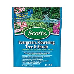 Best Fertilizer For Lilacs  Trees