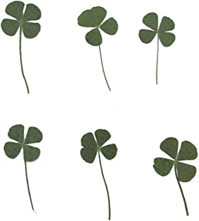 12 Pcs Natural Real Pressed Dried Flowers Four-Leaf Clover Leaf Plant for DIY Resin Jewelry Art Craft
