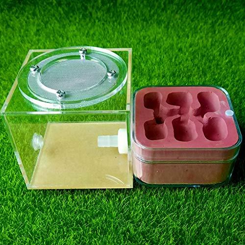 Mini Ameisennest Gips Beton Ameisenfarm Natürlich Ökologisch Ameisenhaus Insekt Schloss Werkstatt Haustier Ameise Hügel Mit Fütterung Bereich (Color : Red)