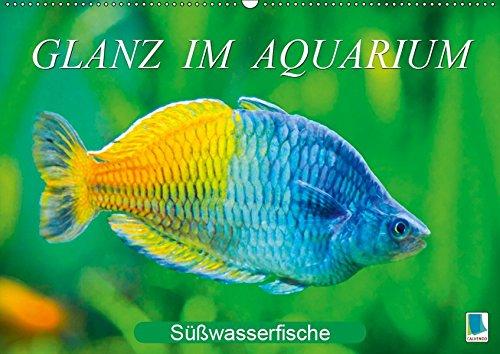 Glanz im Aquarium: Süßwasserfische (Wandkalender 2019 DIN A2 quer): Aquarium: Prachtregenbogenfisch, Marmorskalar & Co. (Monatskalender, 14 Seiten ) (CALVENDO Tiere)
