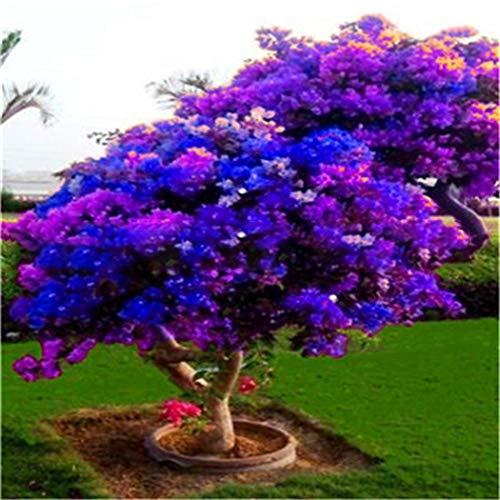 Tomasa Gartensamen- 50 stücke Rhododendron Samen Dufthecke Blumensamen Rhododendron exotische Bonsai Samen Schnittblume, winterhart mehrjährig