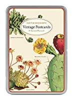 Cavallini & Co. Cacti & Succulents Vintage Postcard Set [並行輸入品]