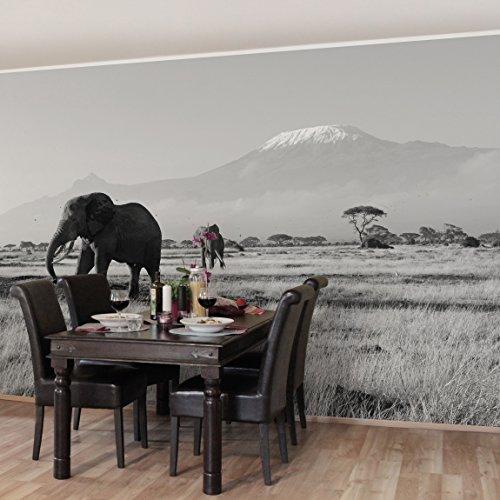 Apalis Vliestapete Elefanten vor dem Kilimanjaro in Kenya II Fototapete Breit | Vlies Tapete Wandtapete Wandbild Foto 3D Fototapete für Schlafzimmer Wohnzimmer Küche | grau, 94610