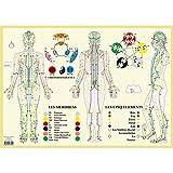 Méridiens et 5 éléments - Poster