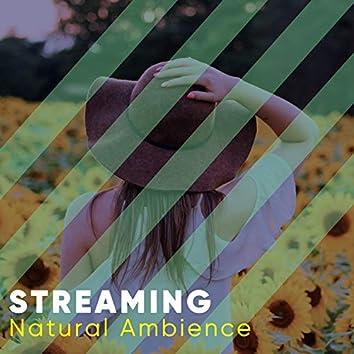Streaming Natural Ambience, Vol. 4