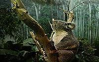 大人のパズル500個コアラクマの動物クリスマスプレゼント52x38cm