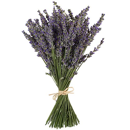 TooGet Natural Lavender Bundles, Freshly Harvested 100 Stems Dried Lavender Bunch 16