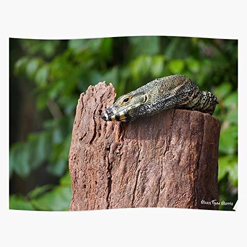 jcrew Queensland Wildlifehq Wildlife Australia Lace Lizard Monitor Goanna Zoo das Beste und neueste Plakat für Wandkunst Wohnkultur Zimmer