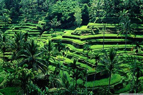 zhangkk 1000 Pezzi Jigsaw Puzzle Bali Indonesia Gioco di Abilità per Tutta La Famiglia, Gioco di Posa Colorato, Puzzle per Adulti da 14 Anni