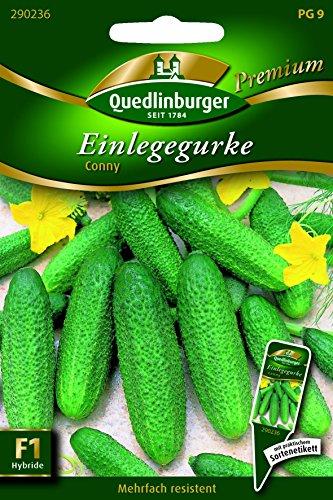 Gurken Einlege- Conny - Cucumis sativus L. QLB Premium Saatgut Gurken