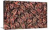 """Global Gallery Fire Bug accoppiamento di Massa, Un Vero Bug del subordine Heteroptera, Europe-Canvas Art-24""""x16"""""""
