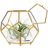 VIVOSUN Tabletop Geometric Terrarium Container Air Plant Holder for Succulent Air Plant (Plants Not Included)