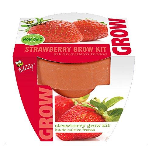 Buzzy 95522 Strawberry Mini Grow Pot