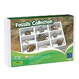 Learning Resources Resources-EI-5204 Collection de fossiles de, EI-5204