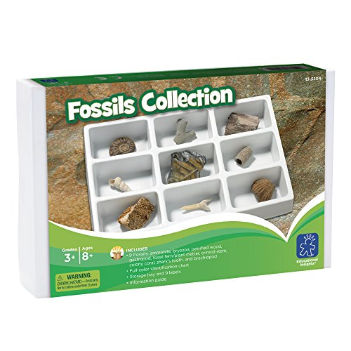 Learning Resources 5204 Fossiliensammlung