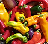 Hot Pepper Seed...image