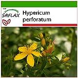 SAFLAX - Iperico - 300 semi - Con substrato - Hypericum perforatum