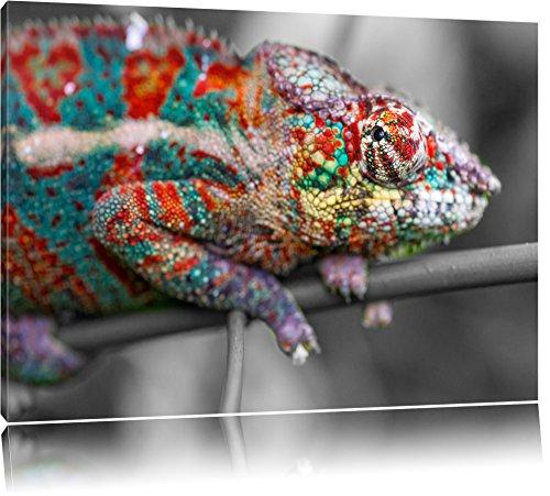 mooi panterkameleonFoto Canvas | Maat: 120x80 cm | Wanddecoraties | Kunstdruk | Volledig gemonteerd