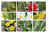 Lincolnshire Marginal Pond Plants Large Pond Pack Starter - Fresh Picked with Lily and Compost