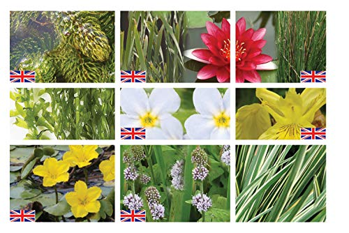 Lincolnshire Marginal Pond Plants Medium Pond Pack Starter - Fresh Picked with Lily and Compost
