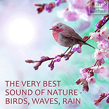 The Very Best Sound Of Nature - Birds, Waves, Rain  (With Forest, Creek, Wind, Thunder)