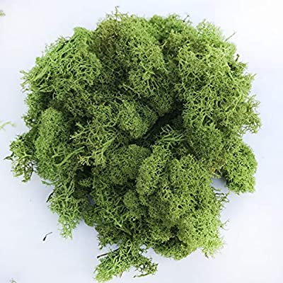 8oz Preserved Reindeer Moss Floral Moss