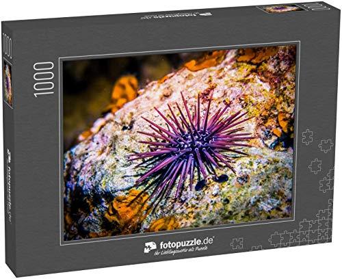 fotopuzzle.de Puzzle 1000 Teile Seeigel auf Felsen Seeigel-Makro Meereslebewesen am Korallenriff und seinem Ökosystem bei Nacht