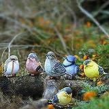 Cozyhoma 6 piezas de pájaros miniaturas de jardín adornos de animales Figuras de resina vívida pita Robin Bird al aire libre Estanque adorno interior escultura decoración