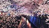 YUMUYAO Puzzle Ad Alta Difficoltà 1000 Pezzi di Puzzle di Decompressione per Adulti Dipinti di Paesaggi Puzzle di Piccole Dimensioni -Luci Notturne del Canale del Giappone Sakura
