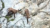 ワイルドライフ 東欧の秘境 タラ渓谷 断崖に野生を見た[NSDS-18328][DVD]