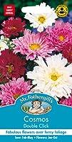 MFFL 英国ミスターフォザーギルズシード Cosmos Double Click コスモス・ダブル・クリック Mr.Fothergill's Seeds