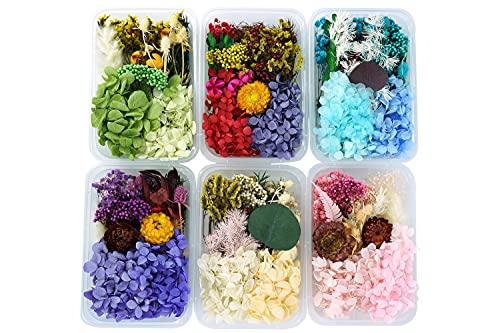 CALIYO Flores secas para Resina, Flores secas adecuadas para la producción Artesanal, Flores secas Manualidades, pequeñas...
