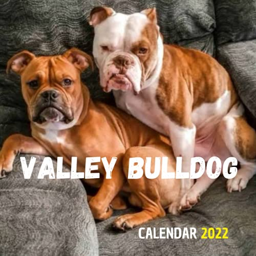 Valley Bulldog Calendar 2022: Wall And Desk Calendar 2022, Size 8.5' x 17' When Open | UK and US Official Holidays | A Must Have Valley Bulldog . Paperback – Desk Calendar